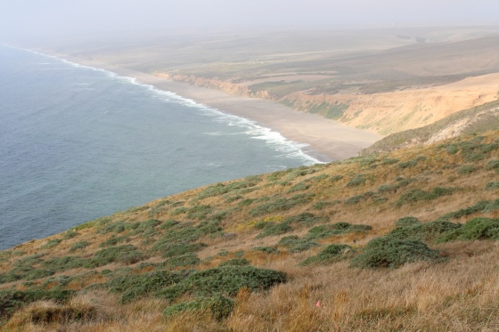 Point Reyes Shorline